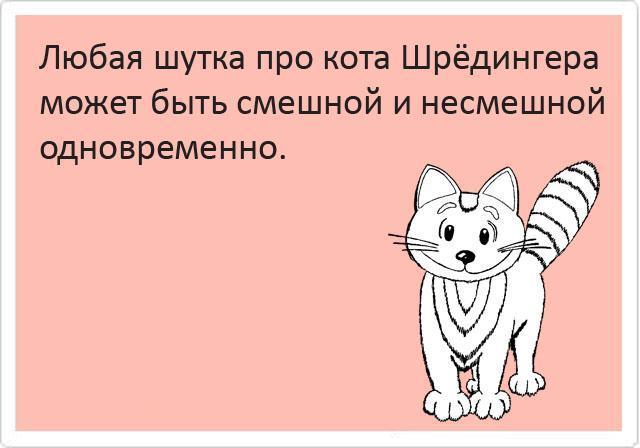 Кот шрёдингера анекдоты